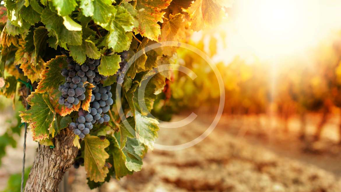 Winemaking – Art, Science, Magic or Technology?
